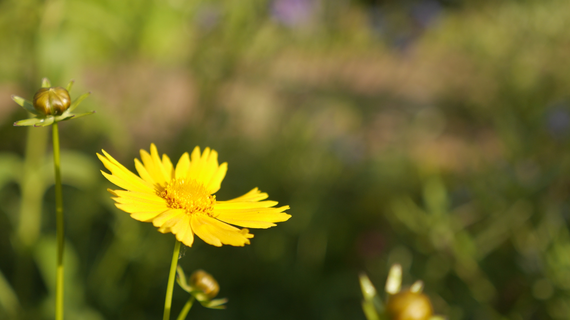 yellow_flower