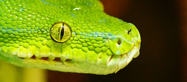 python_head